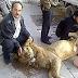 Sungguh Kasihan Warga Suriah Terpaksa Memakan Singa