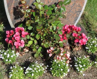 Planter på kirkegården