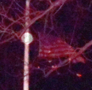orb near flag