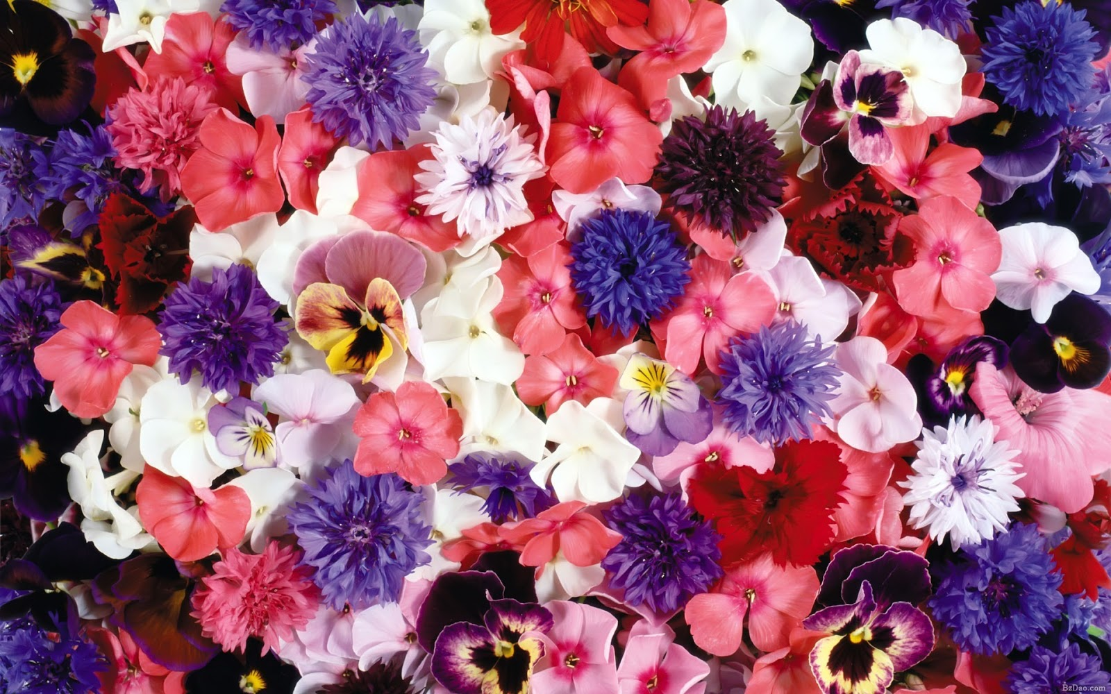 Wallpapernarium: Flores De Colores