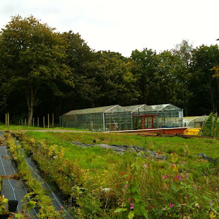 organic gardening, hopwood hall college, life on pig row