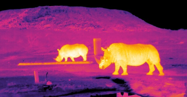 Infrared image of rhinos in South Africa. Credit: Endangered Wildlife Trust/LJMU