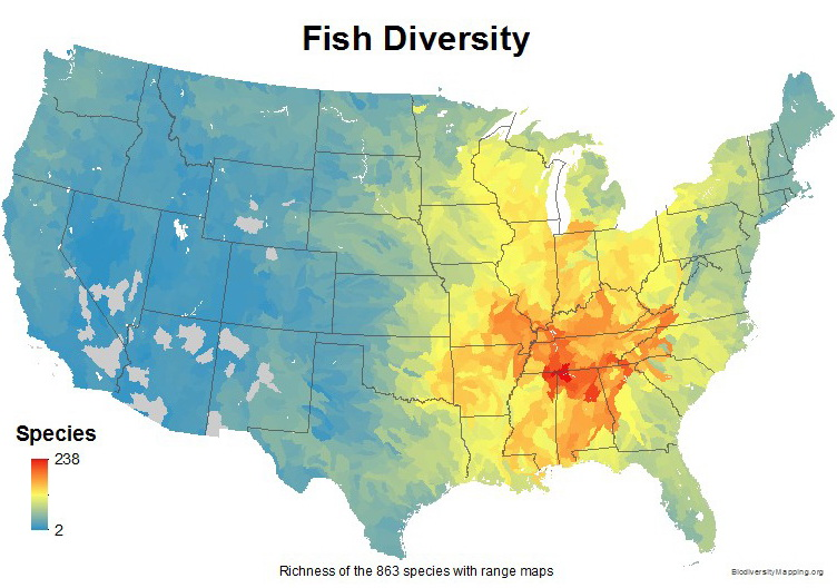 Fish diversity