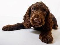 If you adopt a dog -  beautiful puppy