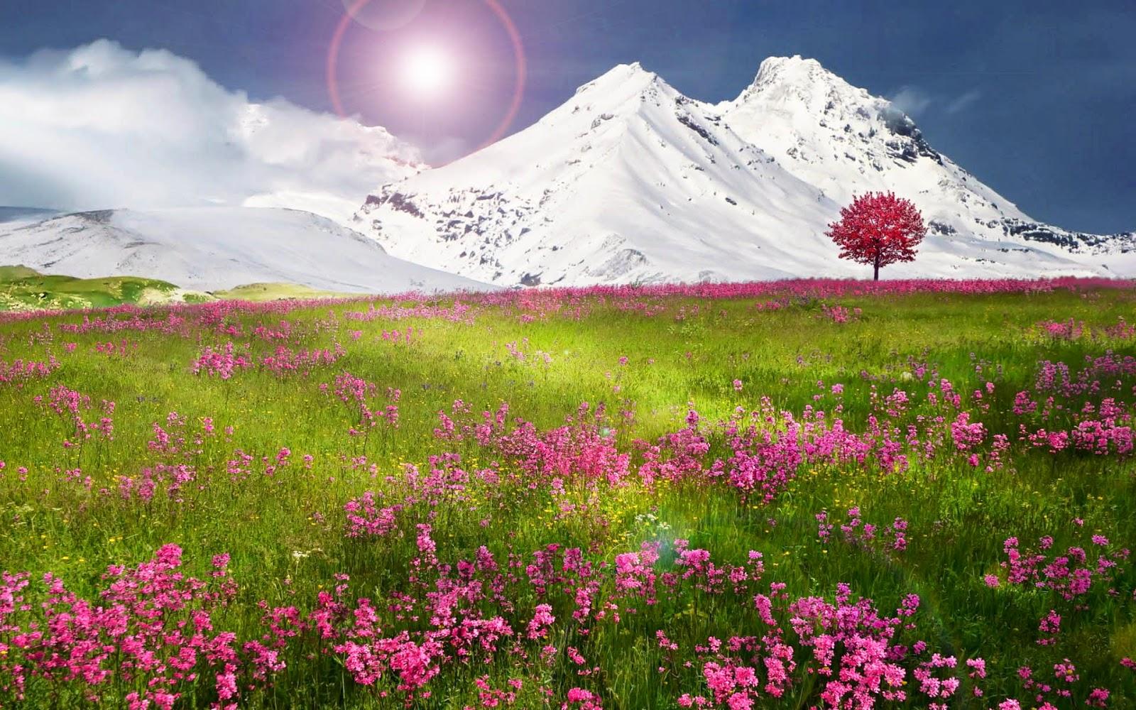 Lente landschap met roze bloemen
