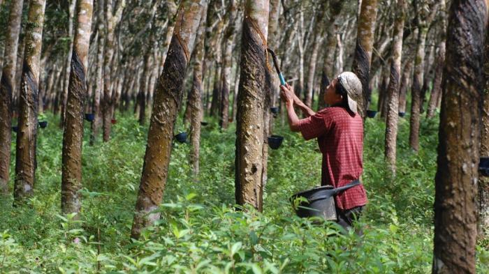 Makalah Sistem Perkebunan Di Indonesia Masa Lalu Dan Masa Depan