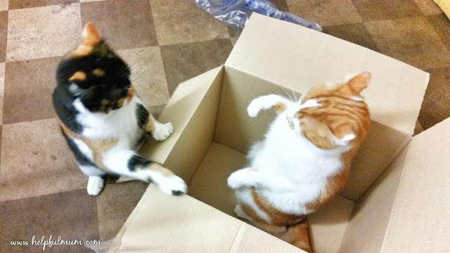 Cats fighting in a box
