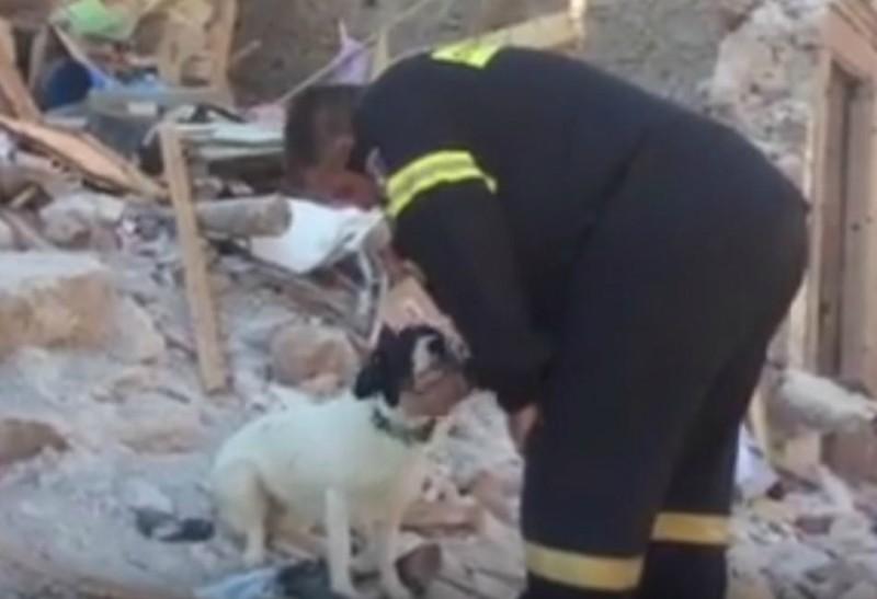 Το σκυλάκι της Ελένης που σκοτώθηκε στη Λέσβο έψαχνε την οικογένεια της! (βίντεο)