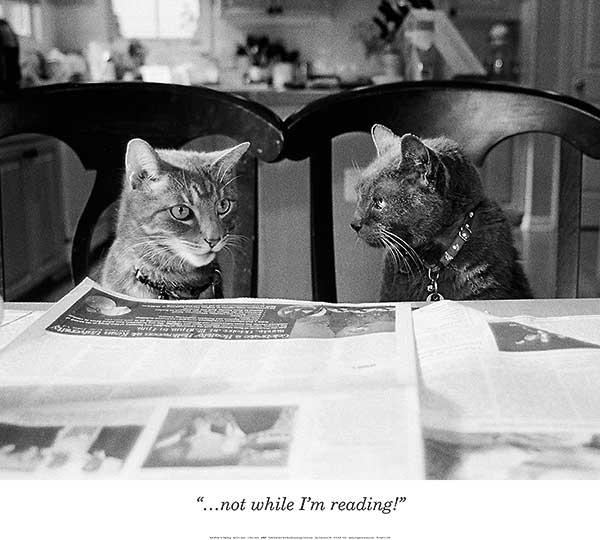citations maison animale