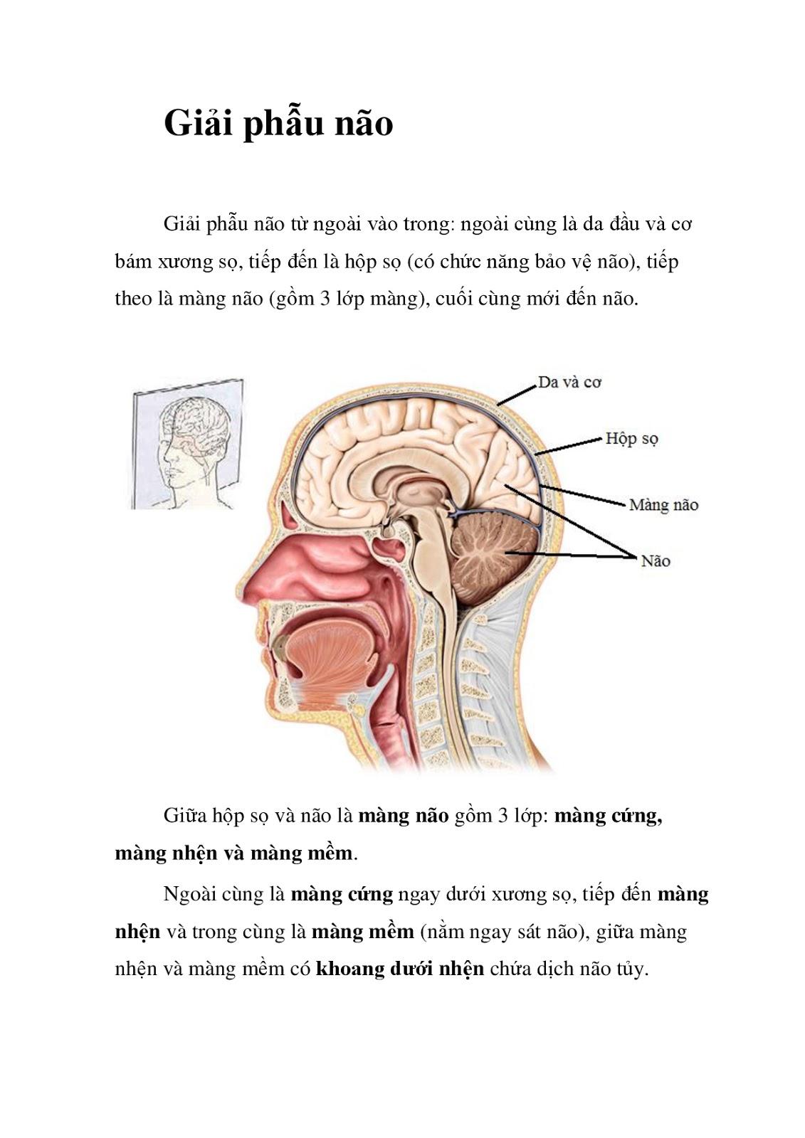 Bài giảng Giải phẫu Não