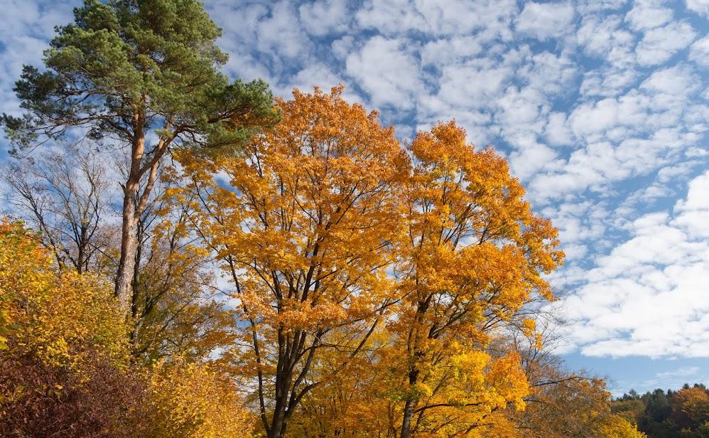 Jesienna feeria barw w Ojcowskim Parku Narodowym - październik 2018