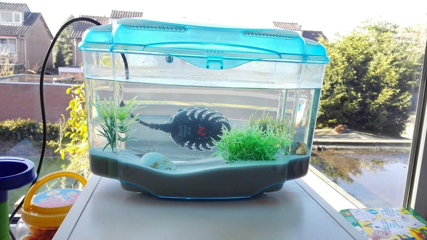 En Ik Geen Lamp De Hele Dag Nacht Op Mijn Kamer Mag Laten Branden Heeft Moeder Er Nog Een Groter Aquarium Met Verwarming Bij Gekocht