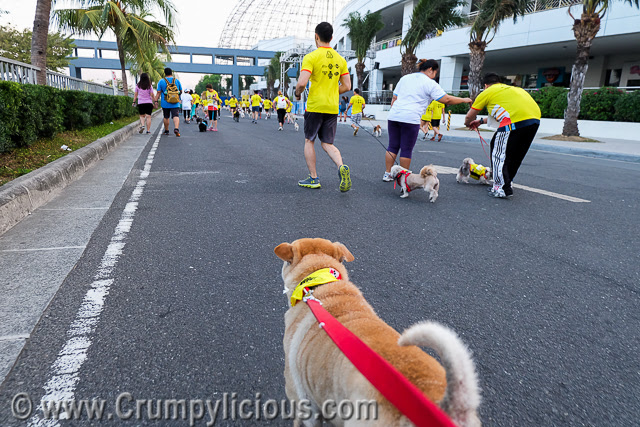 pet express doggie run 2016