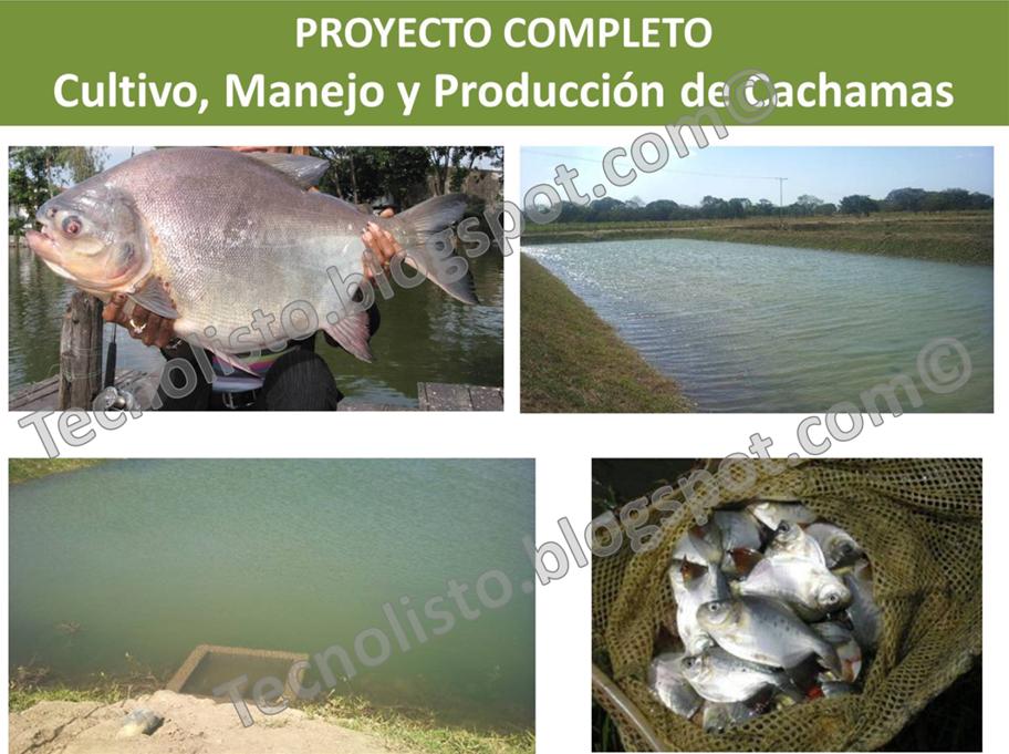 Todos los manuales que necesitas paquete proyecto cultivo Lagunas para cachamas