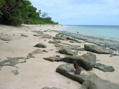 green island, barrera de coral, cairs, australia, vuelta al mundo, round the world, información viajes, consejos, fotos, guía, diario, excursiones