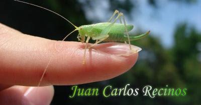 """Relato """"Luz de esperanza"""" por Juan Carlos Recinos en SonicerJ.com"""