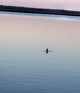Amelia Island Fishing Reports: February 2009