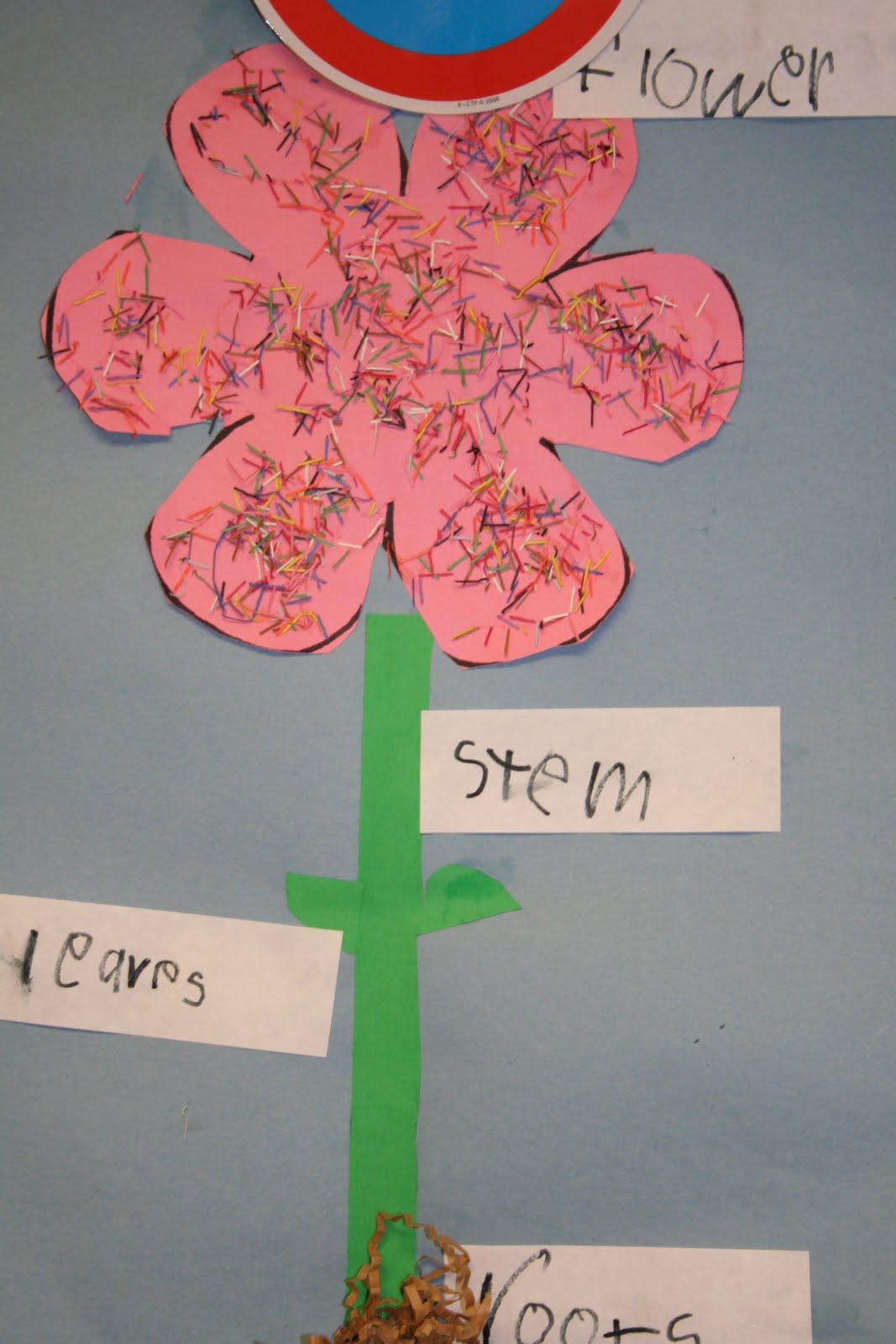 Mrs Lee S Kindergarten Plenty Of Plants