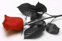 Rosa La Vida Es Una Flor Cuya Miel Es El Amor