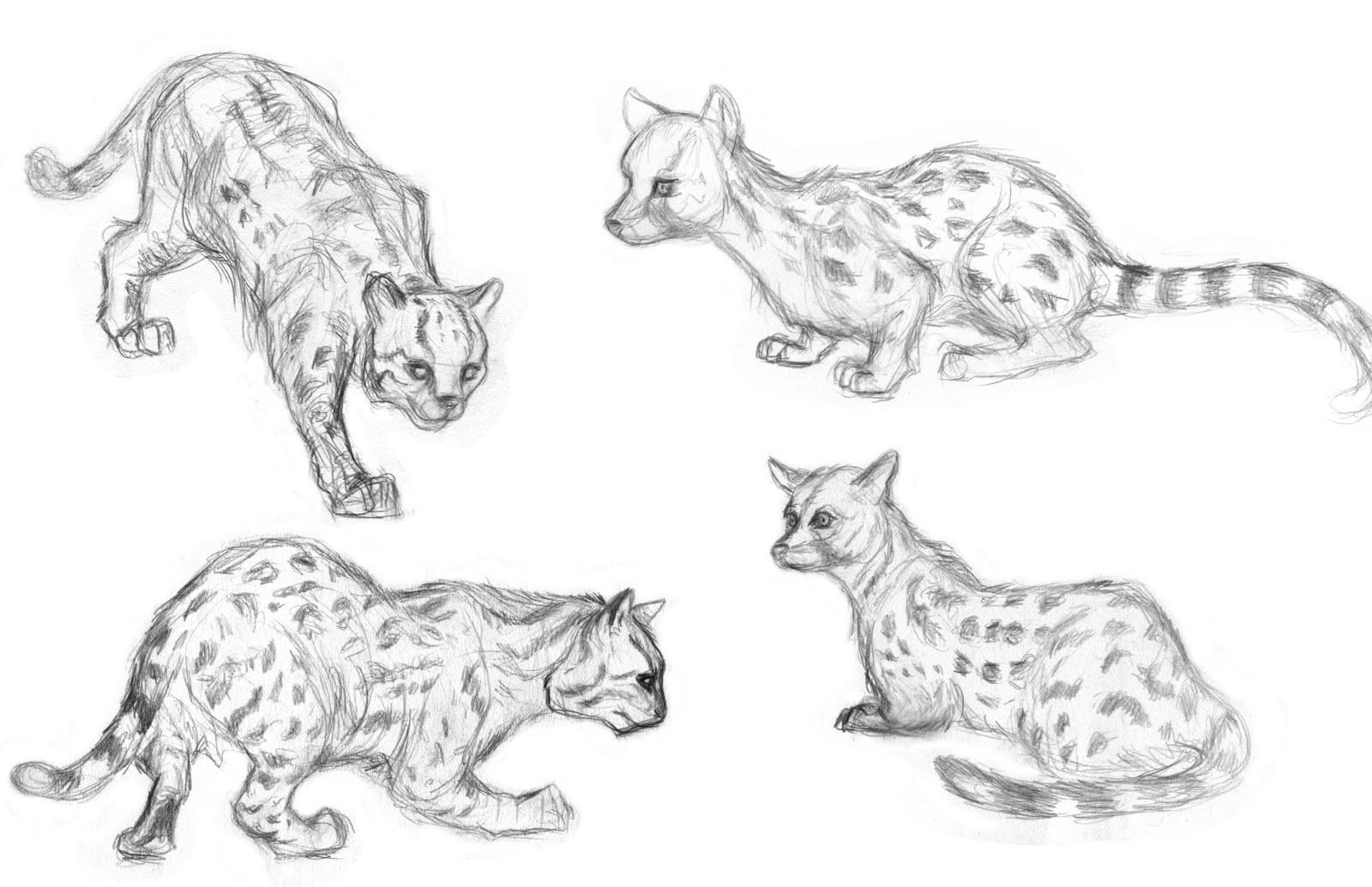 animals animal drawings exotic draw drawing sketches tekeningen dieren
