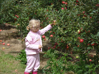 Top Ender picking apples