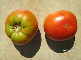 ντομάτα-Mortgage Lifter