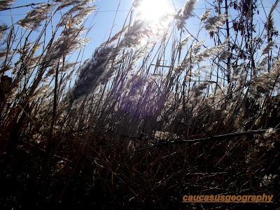 free grass stock image
