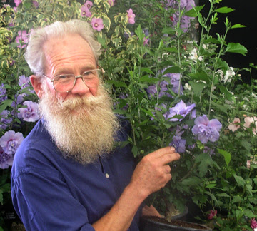 The Plant Hunter: Motorcycles, Lumberjacks and Rose of Sharon.