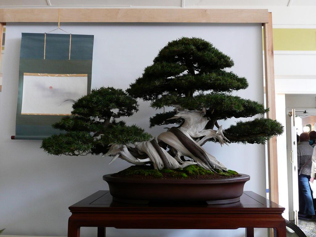 Bonsai Tree 20 Astonishing Bonsai Tree Portland Oregon Inspirations