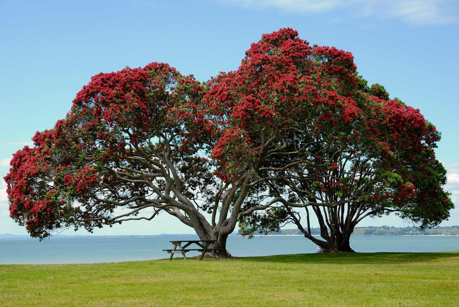 Dreaming Of Open Seas: Beautiful Trees # 5