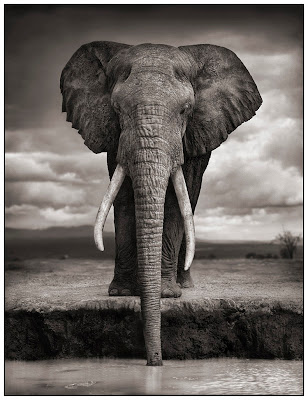 Magnificent collection of B&W animal prints