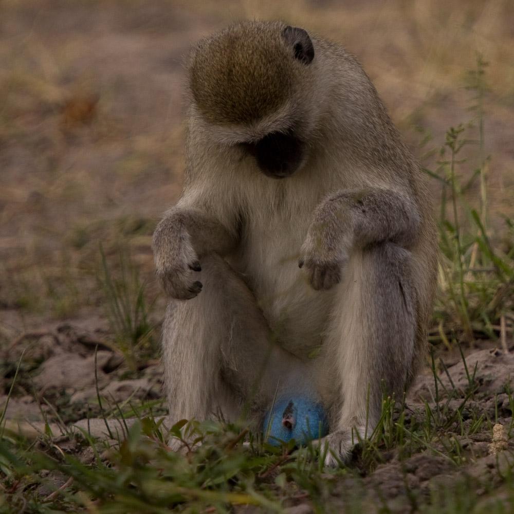 Bonobo my little pony 8