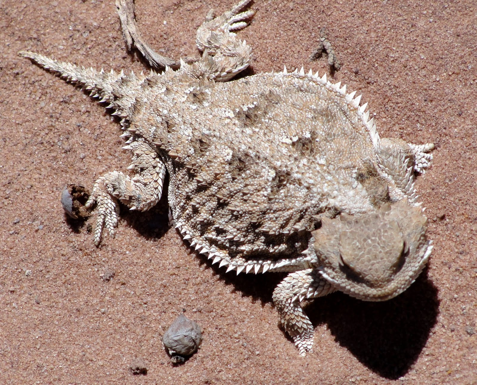 Janie and Steve, Utah Trails: Horny Toads and Winged Docks