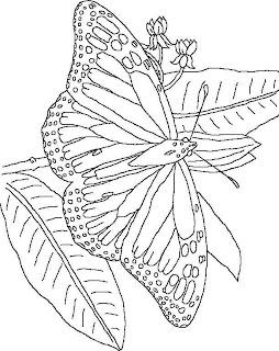 Dibujo De Mariposas Para Imprimir Y Colorear Dibujo Para