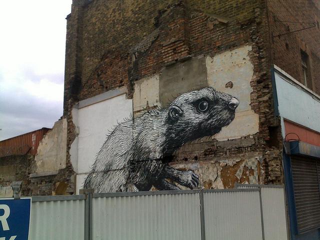 obrázek potkana na polorozbité zdi