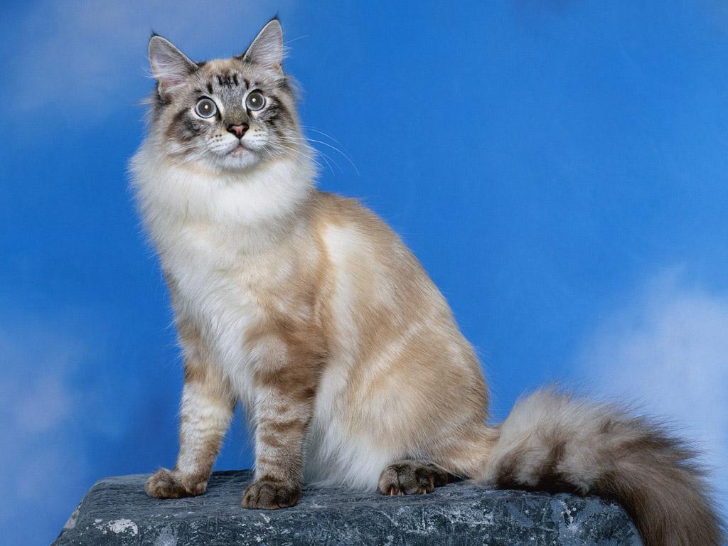 Foto Walpaper Kucing Blog Kang Epot