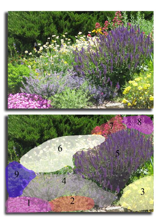 Black Forest Landscape Design Studio: All Summer Blooms