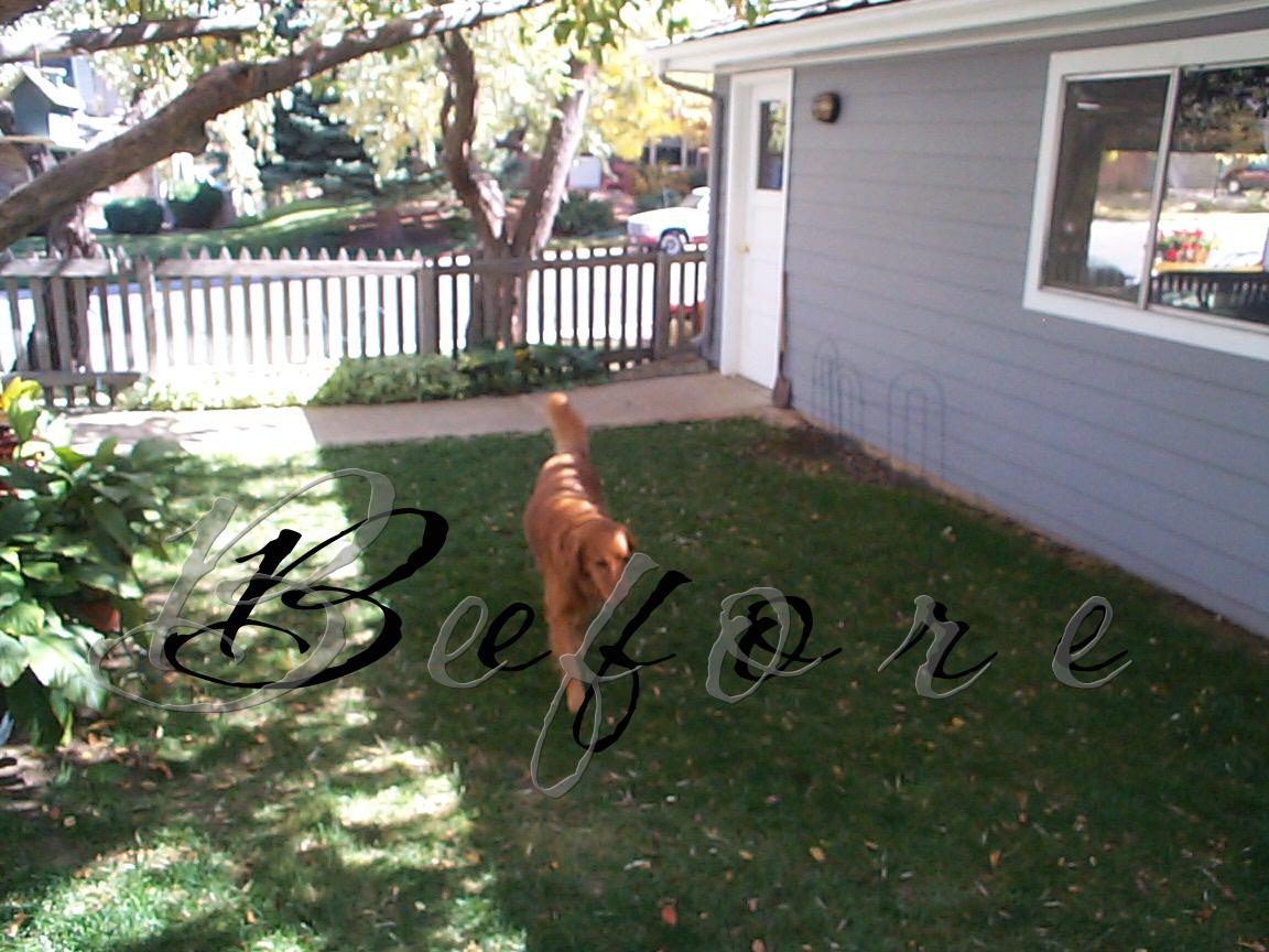 Black Forest Landscape Design Studio: Dog Friendly Yard