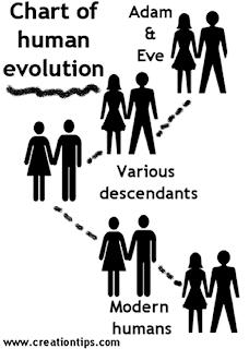 Baptist Potluck: Chart of Human Evolution