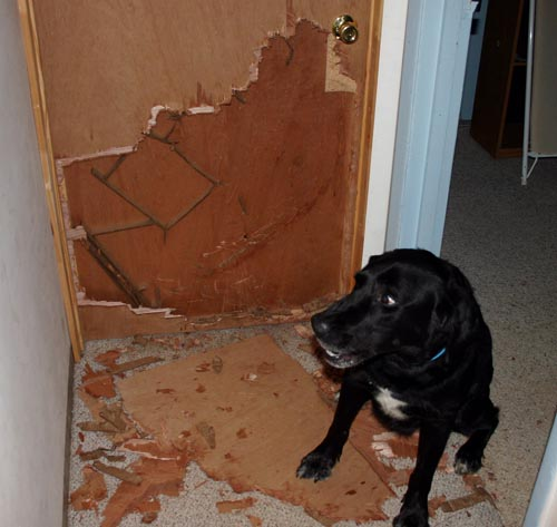 Dog Tears Up Rug: Publicfigure: DOGS WHO TEAR THINGS UP