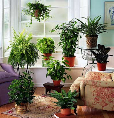 Bring a green atmosphere into your house with indoor - Interior decorating with plants ...