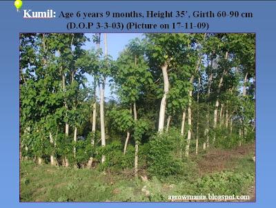 Tree plantation essay in hindi Essay Academic Service