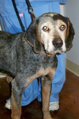 RESCUED!URGENT THEY WILL DIE WITHOUT RESCUE 2/21/10 It seems  their owners dumped them twice.  .KY