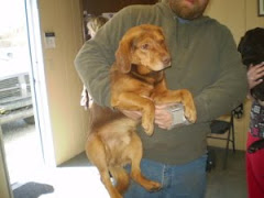 4/4/10  WV Animal Shelter Needs Rescues. Coco and Sissy Urgent.