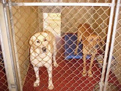UPDATE 10/13/09 Lab Adopted! Not Sure About His Friend.