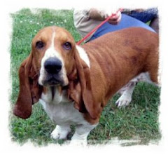 "8/11/10""-""Bowser""~Basset Hound This poor guy is missing some one really bad. He howls cries paces.."