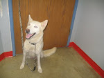 12/28/10 Great Dogs. Richland County Dog Warden-  MANSFIELD OH. Clic Pic