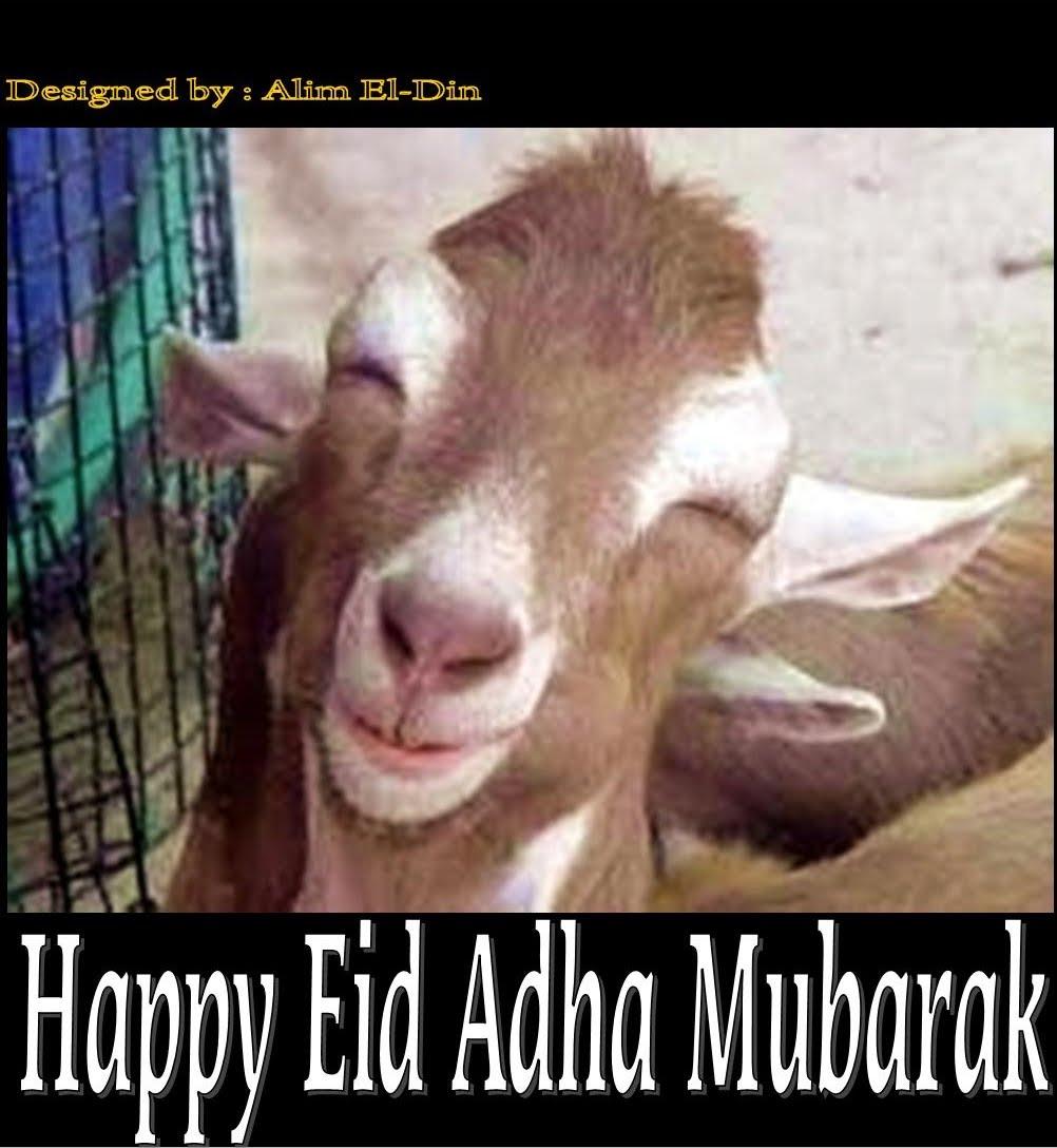 76 Gambar Gambar Meme Idul Adha Paling Bagus