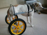 Home Made Dog Wheelchair