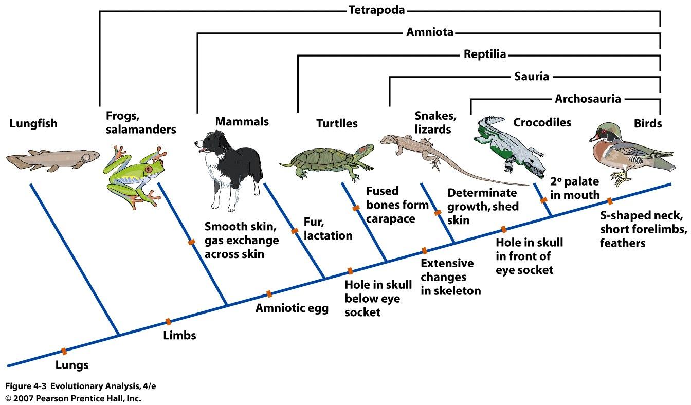Evolutiebiologie Harken En Harkjes